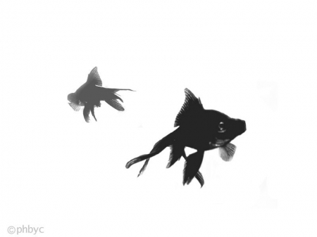 Black and White creatures