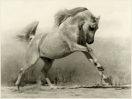 Horses - Beauty in motion