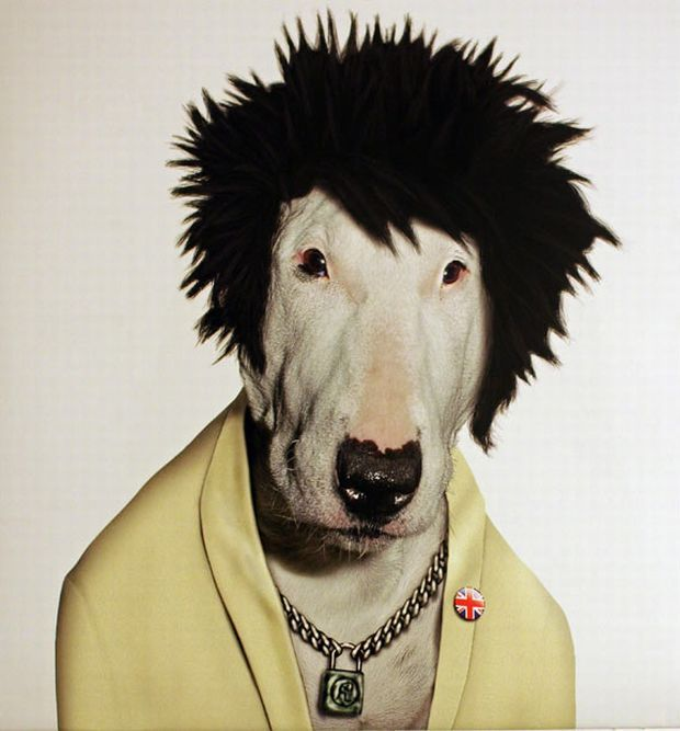 Pets Rock: Animals with personality