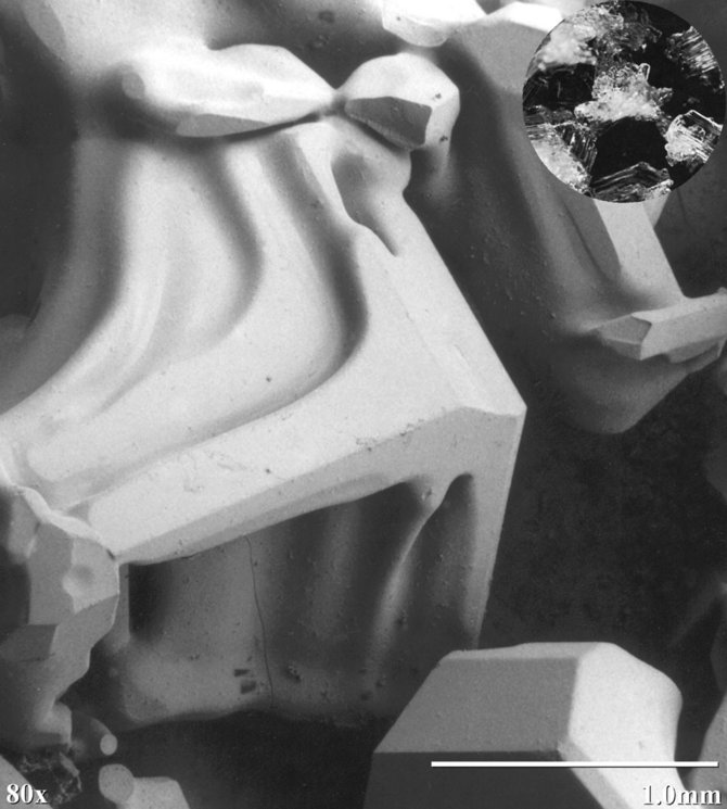 Light and SEM Comparative Images of Snow Crystals