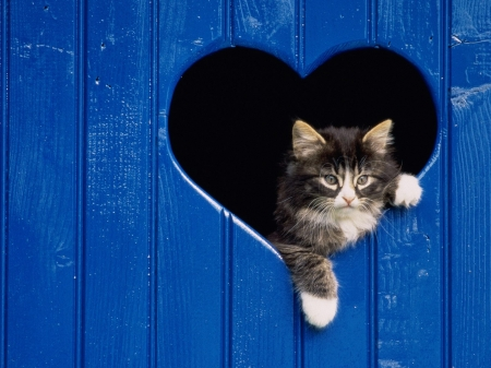 Cats Wallpapers