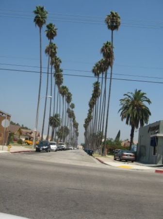 AMERICA( Los Angeles and  Beverly Hills)