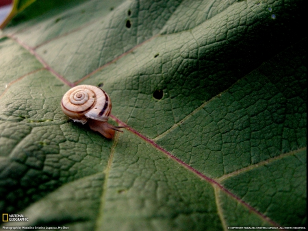 ���� National Geographic �� ������� 2011