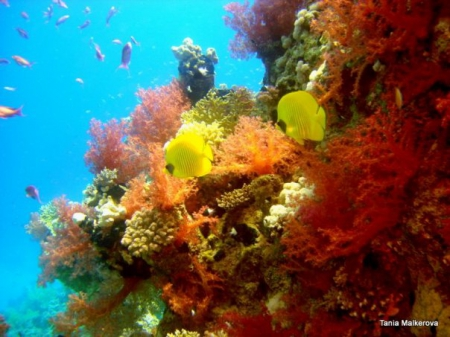 Red Sea (������� ����) � ��� ���������