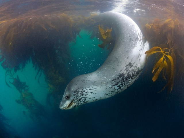 Underwater. National Geographic