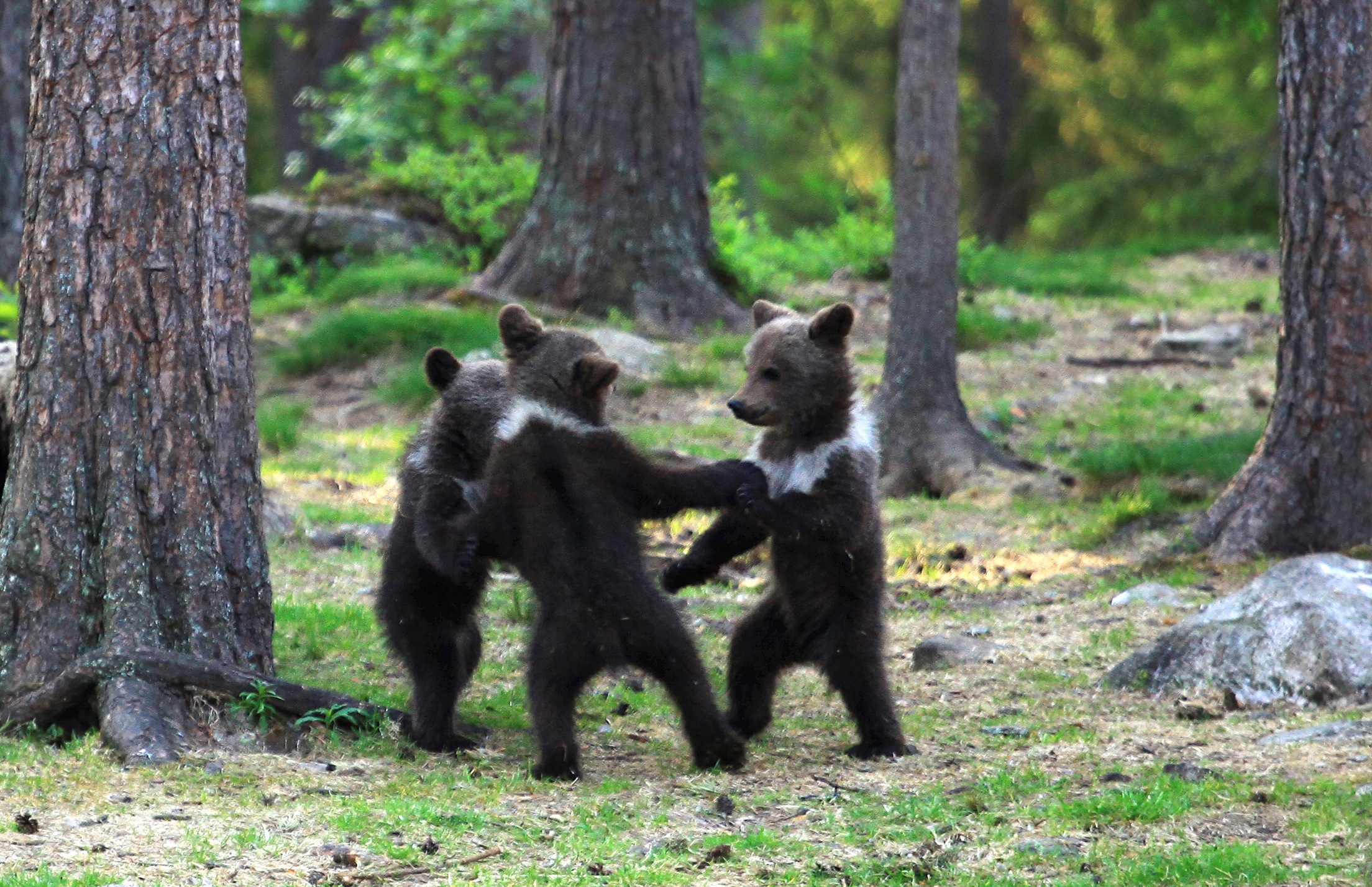 Image result for bear in a forest