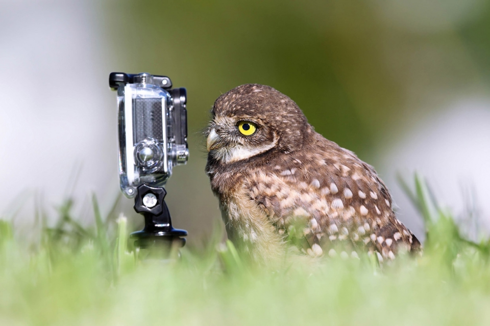 Необычный конкурс Comedy Wildlife Photography Awards 2015